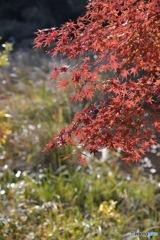 石神井公園の紅葉4