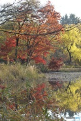 石神井公園の紅葉2