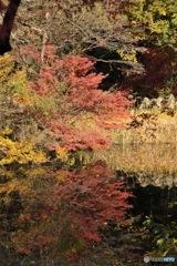 石神井公園の紅葉5