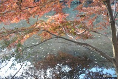 石神井公園の紅葉1
