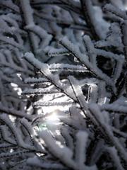 霧氷の木漏れ日
