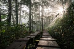 木道を照らす朝日