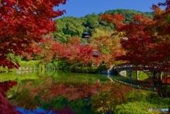 永観堂 放生池