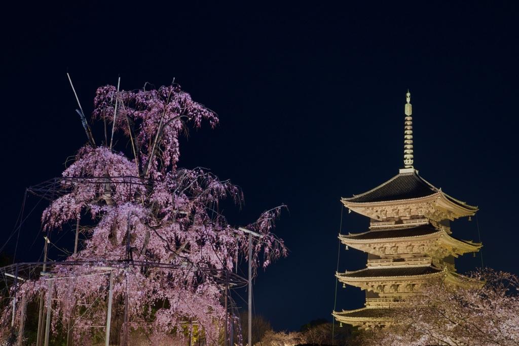 東寺 不二桜と五重塔