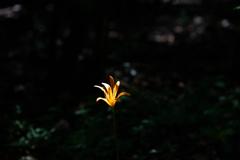 菊池渓谷④