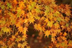 筑波山、紅葉