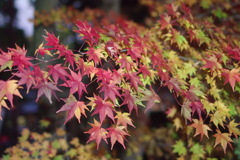つくば山紅葉