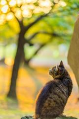 平塚の猫2
