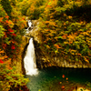 秋の法体の滝
