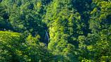 四の滝(山形県鶴岡市)