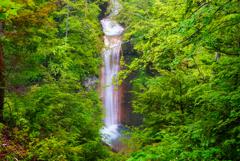 緋の滝 (岐阜県下呂市小坂町)