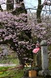 桜とお地蔵さん<是哉寺>