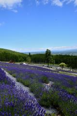 北のお花畑<ラベンダー園彩香の里>