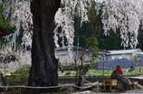 桜とお地蔵さん<高山村中塩>