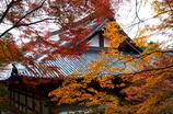 高雄の秋<神護寺>