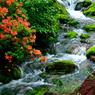 渓流に咲く-Ⅱ
