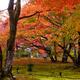 錦秋の庭ーⅢ