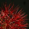 真紅な花火-Ⅳ