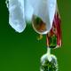 花の涙-Ⅱ