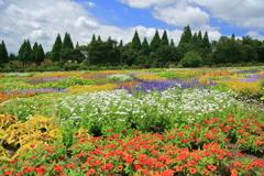 高原の花畑