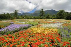 九重連山と花畑