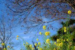 枯れ木に花を
