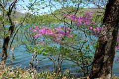 小沼湖畔の輝き