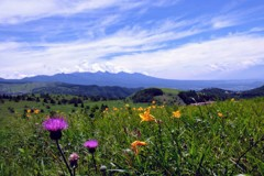 高原の夏風景①