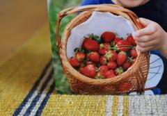 じいちゃんのイチゴと孫の手