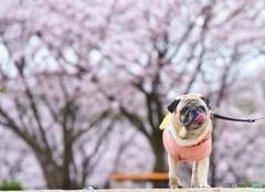 花見にお散歩