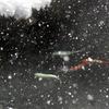 豪雪地を行くー降雪ファンタジー1