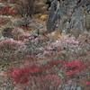 クライミング岩と梅林