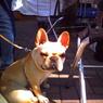 その他のカメラメーカー Digital Harinezumiで撮影した動物(お犬様)の写真(画像)