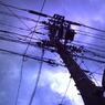その他のカメラメーカー Digital Harinezumiで撮影した風景(鉄の木)の写真(画像)