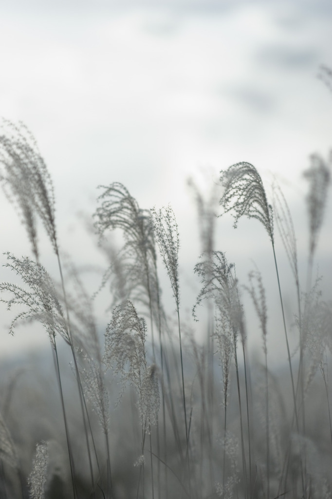2008秋