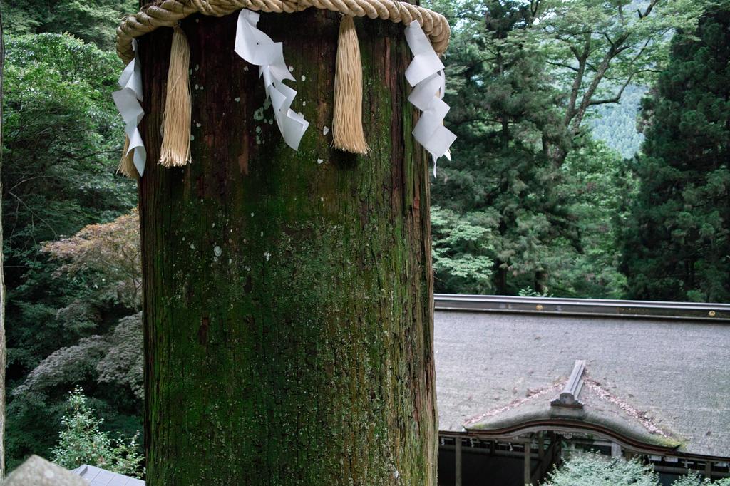 京都鞍馬寺のご神木