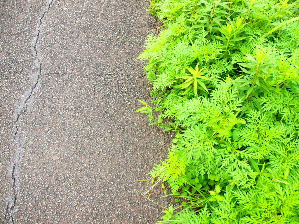 アスファルトと雑草