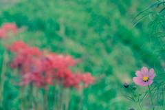 -早朝の花達-