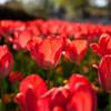 -Memories of Spring #3-