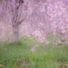 -桜Final-