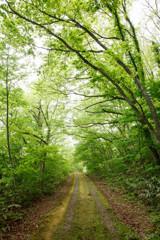 -森の中へ-