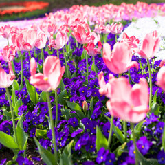 -Memories of Spring-
