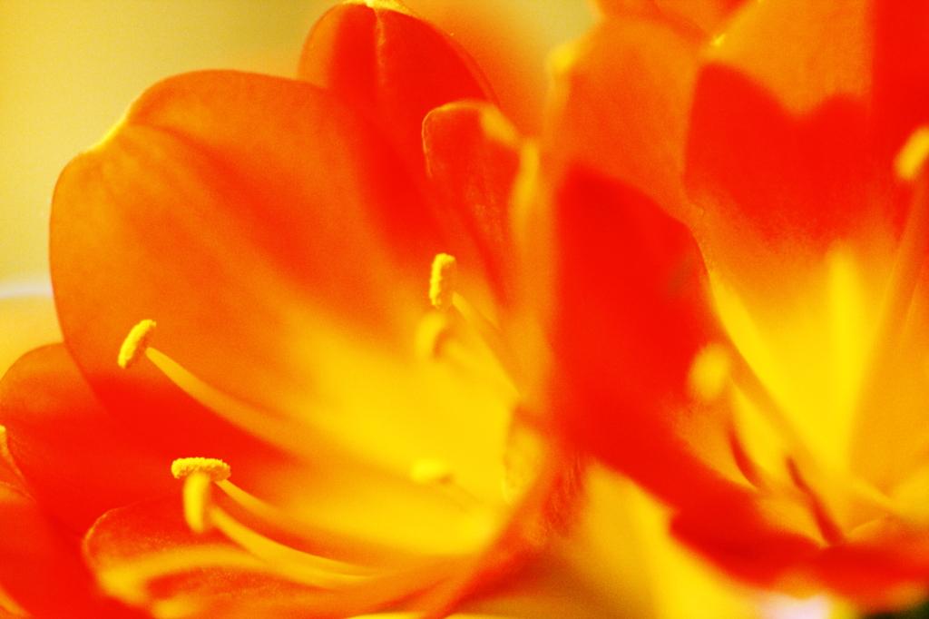「高貴な花」