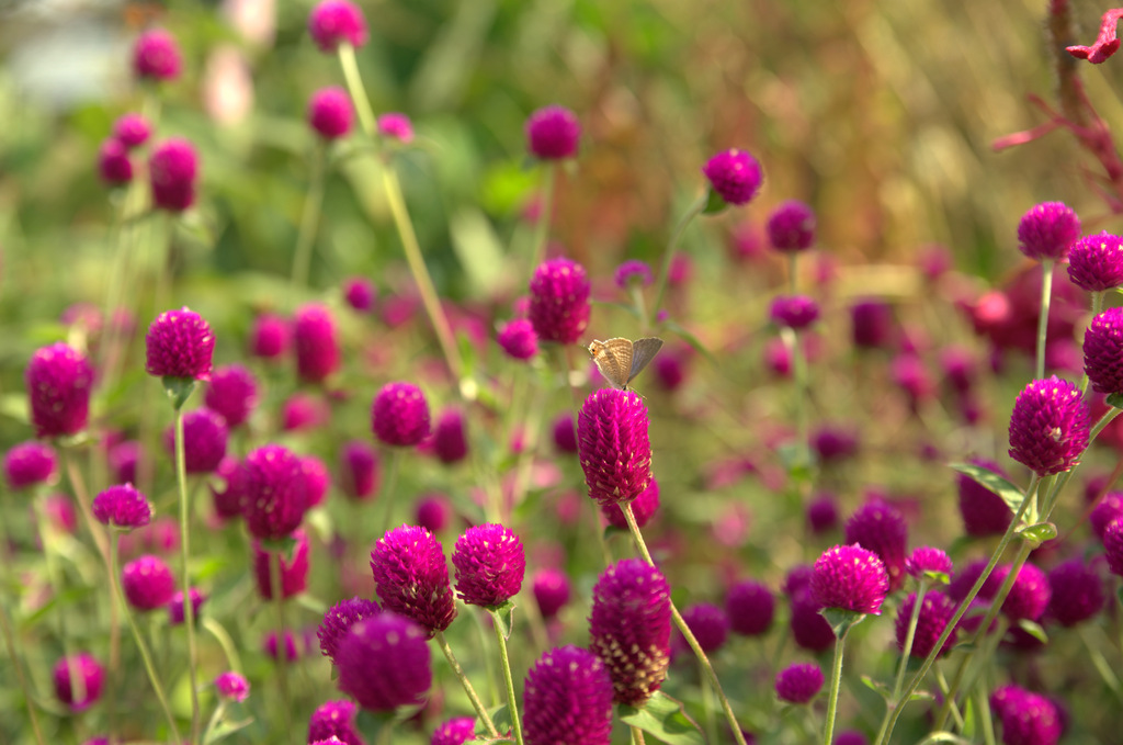 秋の花畑にて