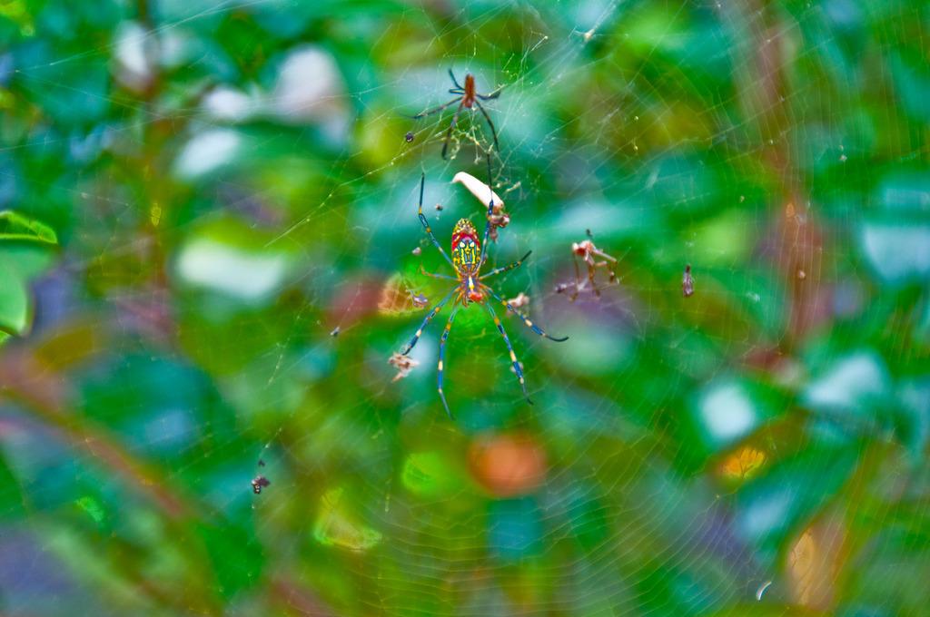 カラフル蜘蛛さん