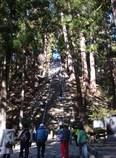 初詣への道のり