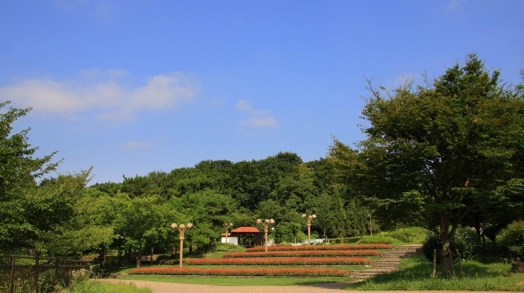 サルビアの丘