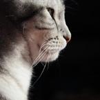 CANON Canon EOS Kiss X2で撮影した動物(憧れ)の写真(画像)