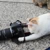 「私の写真見せてよ!」