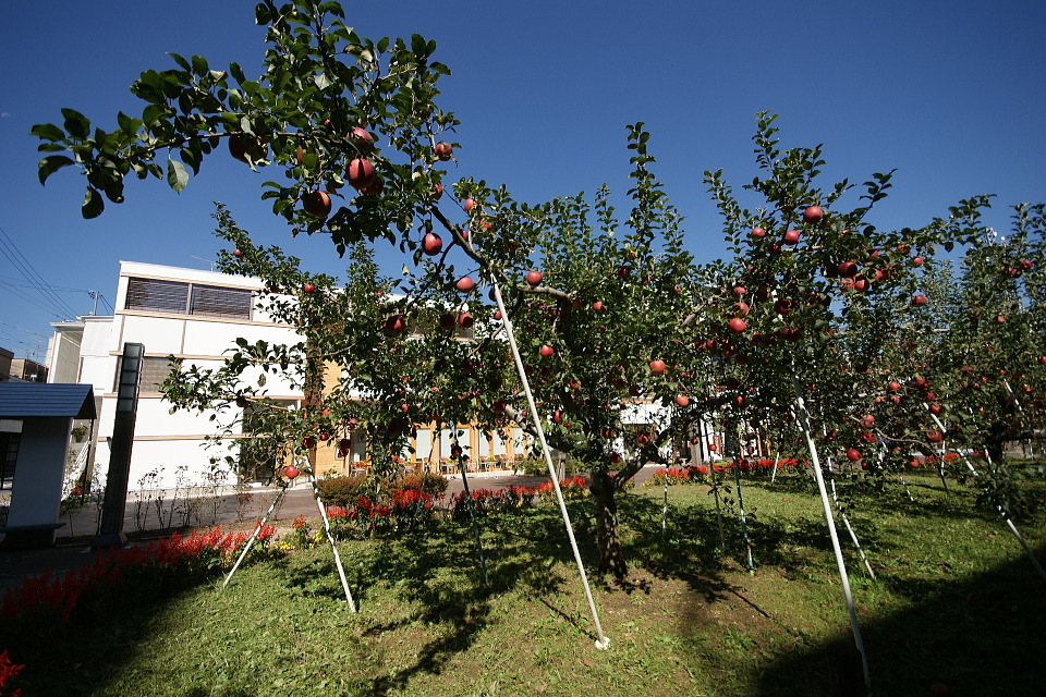 リンゴ並木で収穫だぁ~